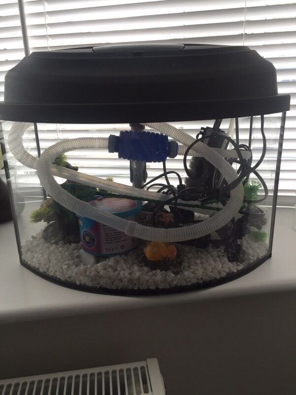 Fish tank food ads buy sell used find right price here for Fish tank rock cleaner
