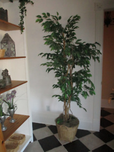 Beautiful Artificial Fig Tree