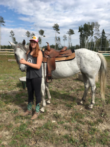 Registered Quarter Horse Mare - With Video