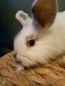 Small male bunny rabbit