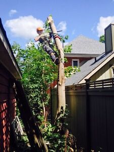 Tree Service and Firewood