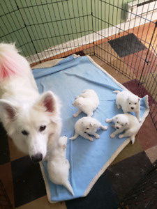 Adopt Dogs Puppies Locally In Moncton Pets Kijiji Classifieds