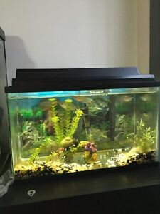 Fish tank with fish & Bird cage