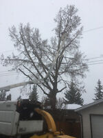 Time for trees removal. Big wind damages around city .
