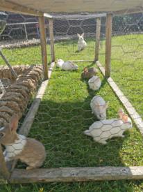 Adorable baby bunnies rabbits