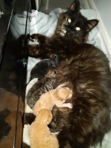 Athéna et ses bébés .