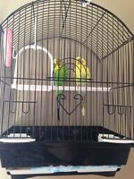 2 budgies in a cage