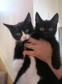 Kittens.. BOTH NOW SOLD