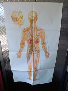 Medical poster, human body accupuncture