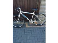 Gents mountain bike (aluminium) WILL DELIVER)
