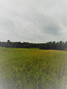 Westport Ontario Land For Sale