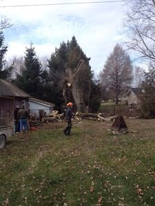 Tree Service/Removal Kingston Kingston Area image 7
