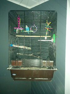 Birdcage (with budgie)