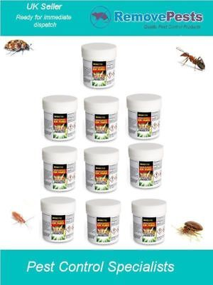 10 Midi Killer Bomb  fogger bed bug bedbugs silverfish carpet moth Insecto
