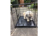Dog crate cage for small dog
