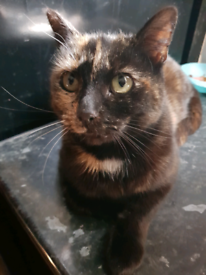 Rehome cat