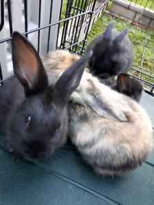 Rex rabbits very friendly...CALL ONLY