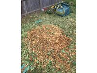 Free multch fresh cut chippings