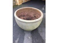 Large concrete plant pot