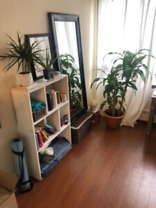 Bachelor Apartment Downtown Halifax! FREE rent for January!