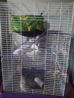 Trade wanted - 3 level rodent cage for a one level cage