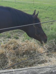 Lovely Warmblood available for Part-board. Lessons included!
