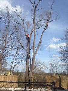 Tree removals, storm clean up , pruning, and felling of trees Cambridge Kitchener Area image 3