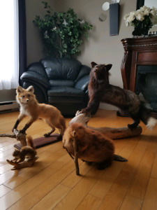 Taxidermy Collectibles