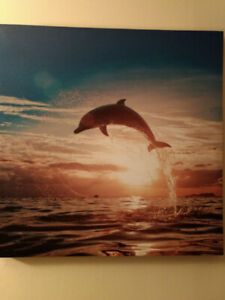 Dolphin Photo Print on Canvas