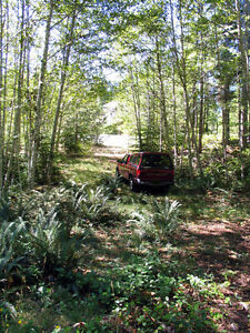 Gold River B.C. Large House Lot for Sale $69,900 Campbell River Comox Valley Area image 6