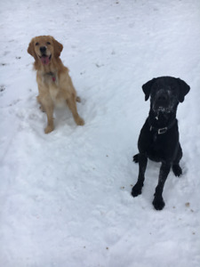 Dog Walking Services - Experienced & Reliable (Insured)