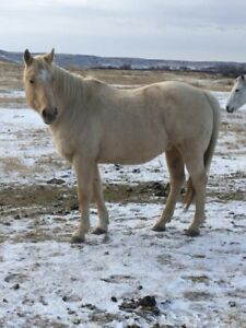 Ranch Horse/Project Horses