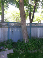 TREE CUTTING AND REMOVAL SERVICES