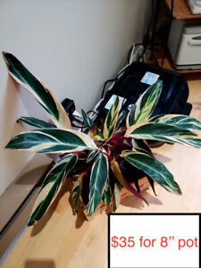 Indoor houseplants for sale