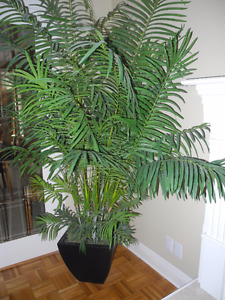 Imitation Potted Silk Palm Tree