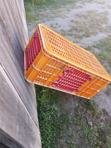 Looking for Plastic Turkey Crates
