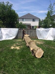 Quick acting Tree Service and Storm clean up Peterborough Peterborough Area image 4