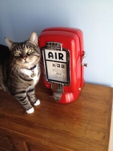 buying air meter, old oil can, red indian, white rose, sign