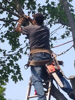 Tree removal, lot clearing fully insured valley wide