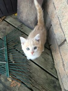 Free kittens! Hanover ontario