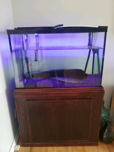 Mint aquarium 65 gallons ..with everything 700$