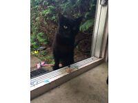 Found! Black cat