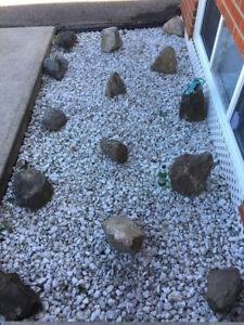 20 Big real rocks a vendre