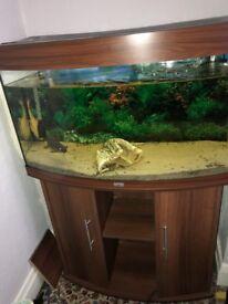 Tropical fish tank juwel 180 dark wood