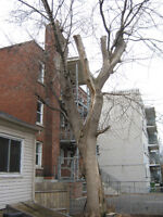 NEED TREE REMOVED FOR FREE