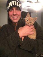 Chat trouvé dehors à donner