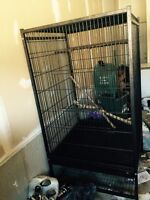 steel 4x6 bird cage for Sale
