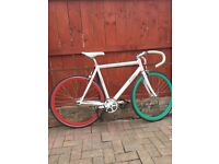 Pinarello Lungavita 2013 53cm single speed / fixed gear bike