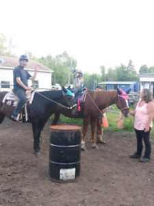 Looking for  horse semi retired or not.