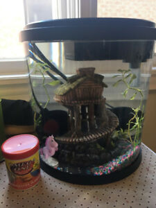 1-gallon tank and 3-gallon tank with accessories including plant